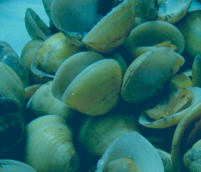 ban-depuradora-de-moluscos